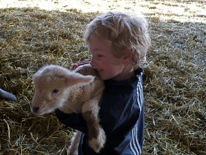 Graeme is still learning to love scones...but he loves the new lambs at Grandpa & Grandma's.